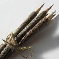 tree branch twig pencils